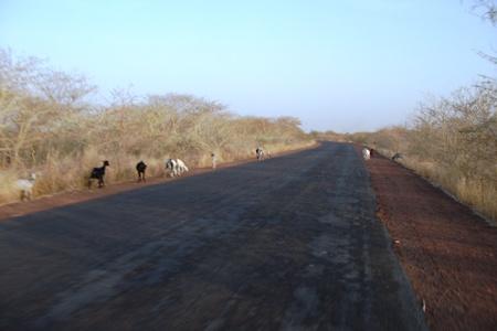 Conte du village : le voyage de l'âne, la chèvre et le chien