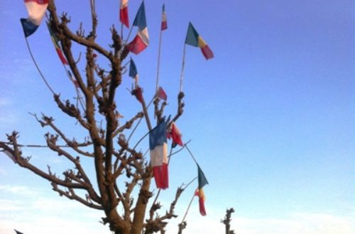 Article : Arbre Mali-France?