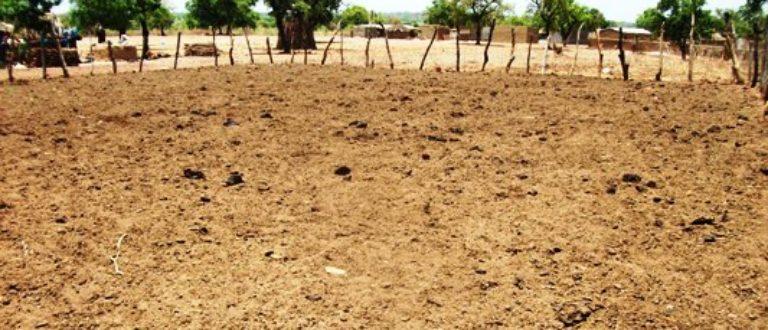 Article : Fumier tradition, un des bénéfices de l'élevage au village